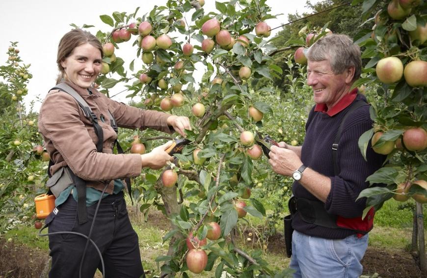 Apfelernte mit Doris und Ernst Schuster. © Obstquelle Schuster